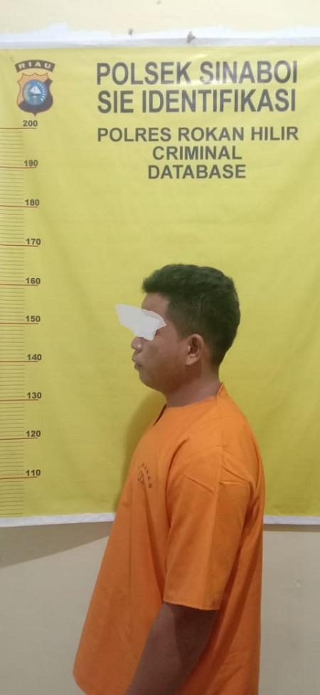 Tim Opsnal Sat Reskrim Polsek Sinaboi Polres Rokan Hilir Berhasil Tangkap Buronan DPO Atas Dugaan Kasus Pencrian Buah Sawit